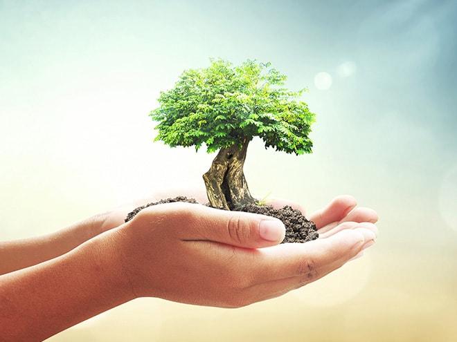 Umwelt & Nachhaltigkeit